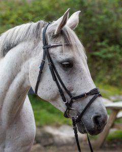 longere hest utstyr